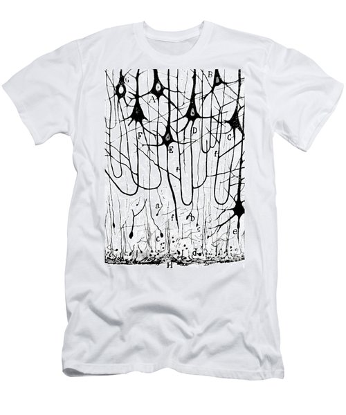 Pyramidal Cells Illustrated By Cajal Men's T-Shirt (Athletic Fit)