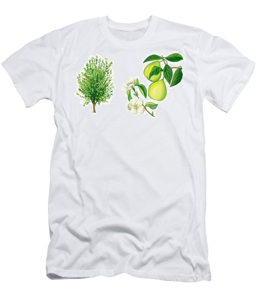 Quince Tree Men's T-Shirt (Athletic Fit)