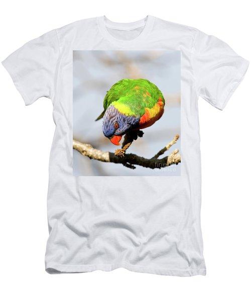 Rainbow Lorikeet 03 Men's T-Shirt (Athletic Fit)
