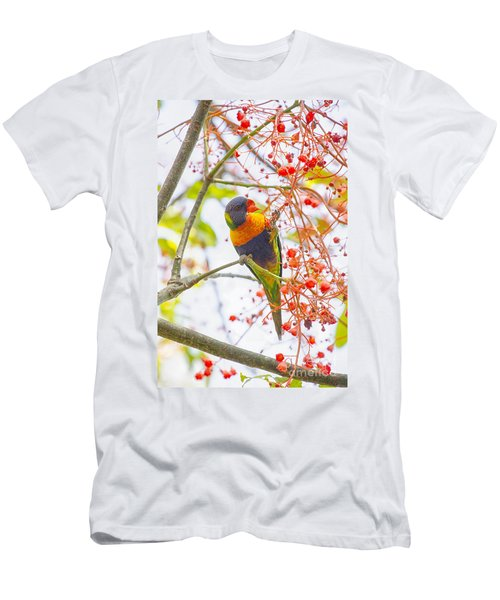 Rainbow Lorikeet In Flame Tree Men's T-Shirt (Athletic Fit)