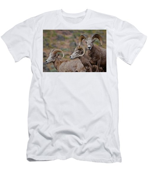 Rams In Three Men's T-Shirt (Athletic Fit)