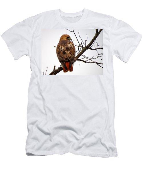 Red Tail Hawk In Winter Men's T-Shirt (Slim Fit) by Dianne Cowen