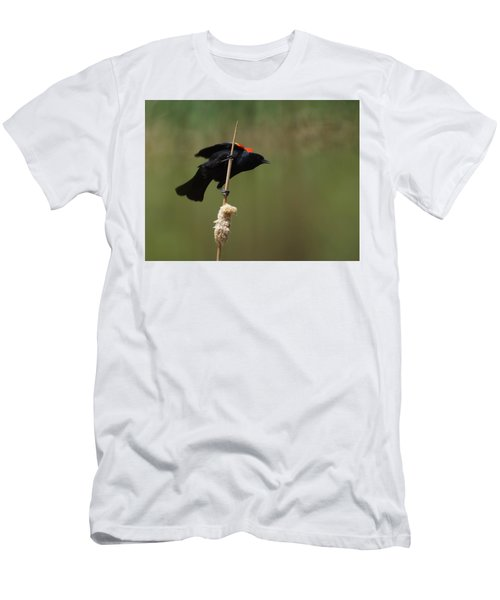 Red Winged Blackbird 3 Men's T-Shirt (Athletic Fit)