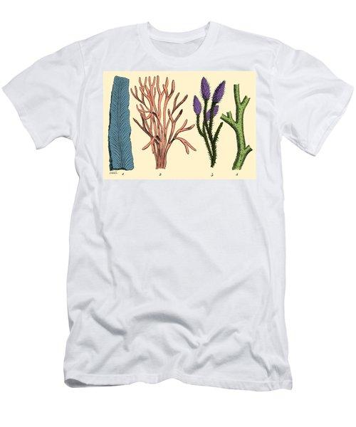 Silurian Plants Men's T-Shirt (Athletic Fit)