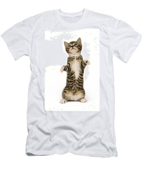 Standing Cat Ck305 Men's T-Shirt (Athletic Fit)