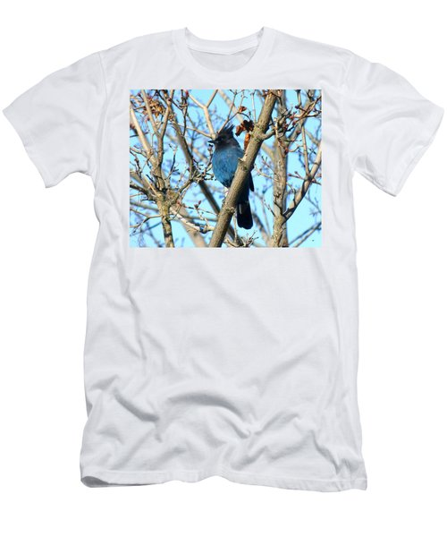 Steller's Jay In Winter Men's T-Shirt (Athletic Fit)