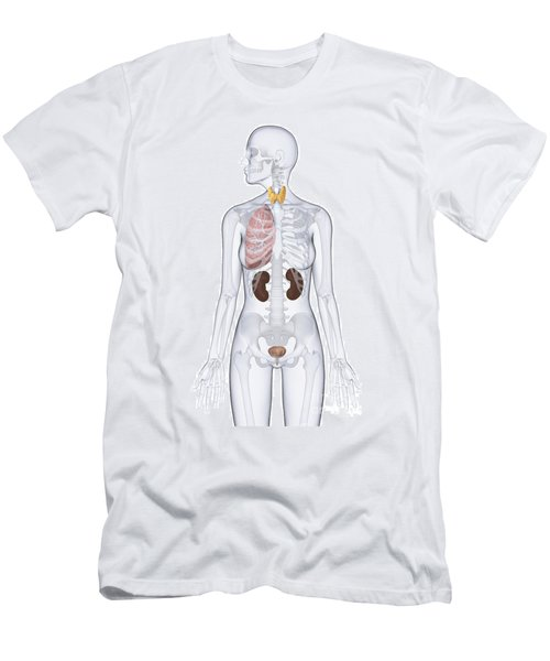 Thyroid, Lung, Kidneys, And Bladder Men's T-Shirt (Athletic Fit)