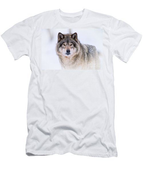 Timber Wolf Pictures 256 Men's T-Shirt (Athletic Fit)