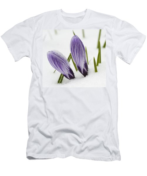Two Purple Crocuses In Spring With Snow Men's T-Shirt (Athletic Fit)