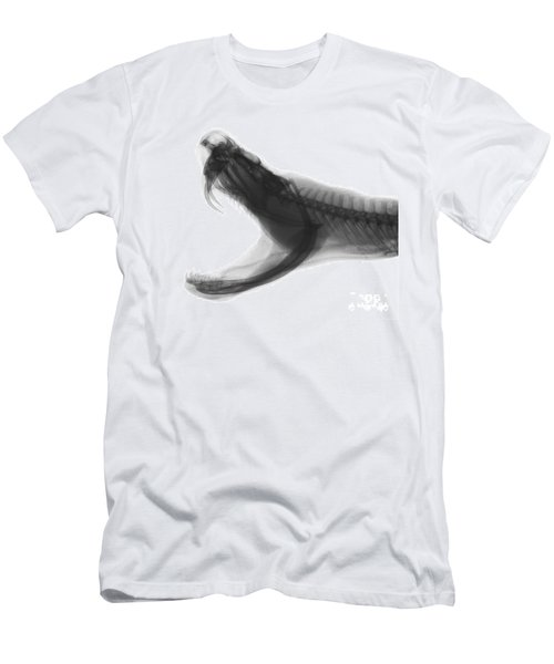 Eastern Diamondback Rattlesnake, X-ray Men's T-Shirt (Athletic Fit)