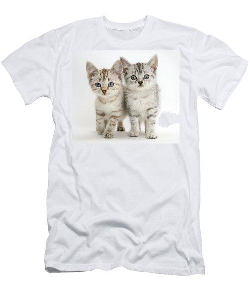 Bengal-cross Kittens Men's T-Shirt (Athletic Fit)