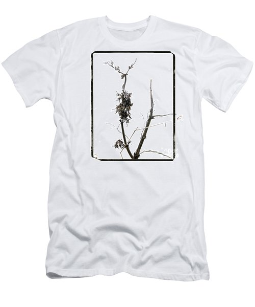 Branch Of Dried Out Flowers. Men's T-Shirt (Athletic Fit)