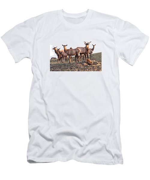 Early Morning Herd Men's T-Shirt (Slim Fit) by CR  Courson