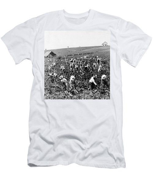 Tobacco Field In Montpelier - Jamaica - C 1900 Men's T-Shirt (Athletic Fit)
