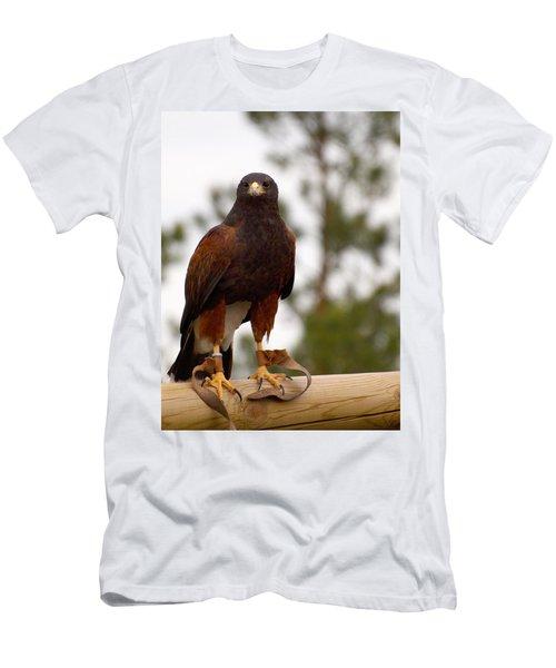 Harris's Hawk Men's T-Shirt (Athletic Fit)
