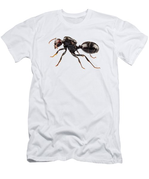 Black Garden Ant Species Lasius Niger Men's T-Shirt (Athletic Fit)