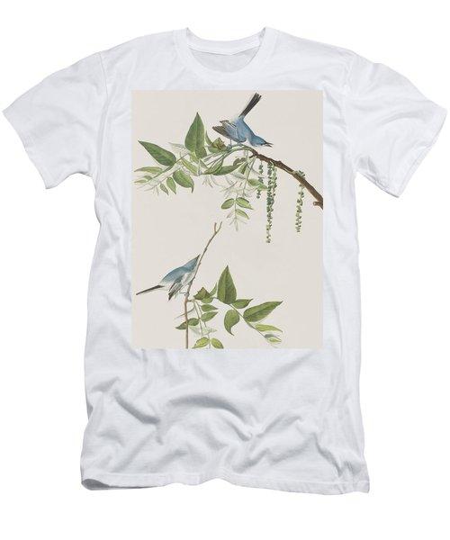 Blue Grey Flycatcher Men's T-Shirt (Athletic Fit)