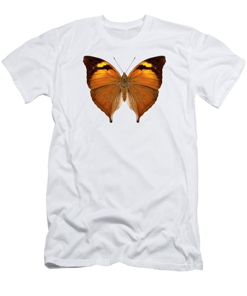 butterfly species Doleschallia bisaltide pratipa Men's T-Shirt (Athletic Fit)