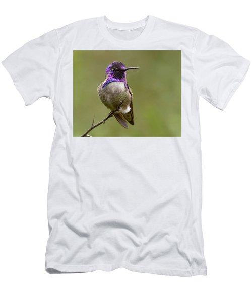Costa's Hummingbird, Solano County California Men's T-Shirt (Slim Fit) by Doug Herr