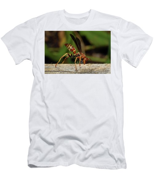 Paper Wasp Men's T-Shirt (Athletic Fit)