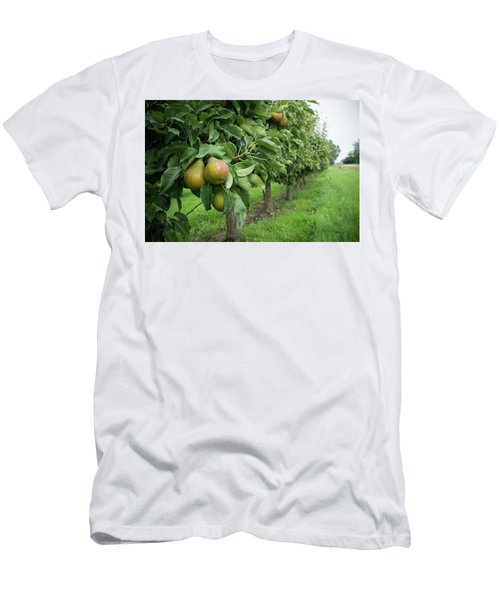 Pear Orchard Men's T-Shirt (Athletic Fit)