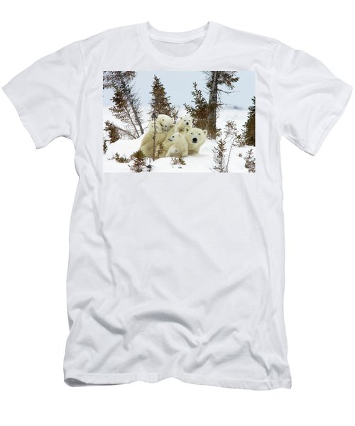 Polar Bear Ursus Maritimus Trio Men's T-Shirt (Athletic Fit)