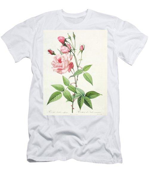 Rosa Indica Vulgaris Men's T-Shirt (Athletic Fit)