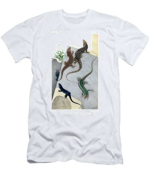 Varieties Of Wall Lizard Men's T-Shirt (Slim Fit) by Jacques von Bedriaga