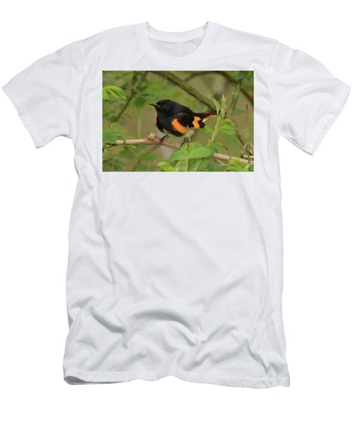 American Redstart Men's T-Shirt (Slim Fit) by Alan Lenk
