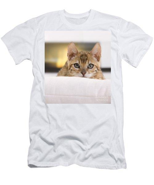 Bengal Kitten Men's T-Shirt (Athletic Fit)