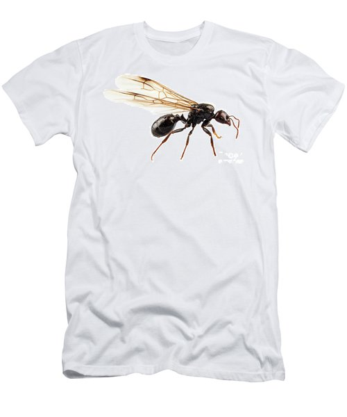 Black Winged Garden Ant Species Niger Lasius Men's T-Shirt (Athletic Fit)