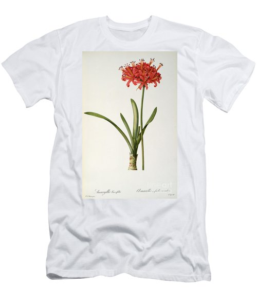 Amaryllis Curvifolia Men's T-Shirt (Athletic Fit)