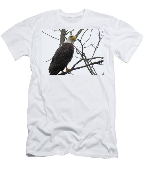American Bald Eagle Pictures Men's T-Shirt (Slim Fit) by Scott Cameron