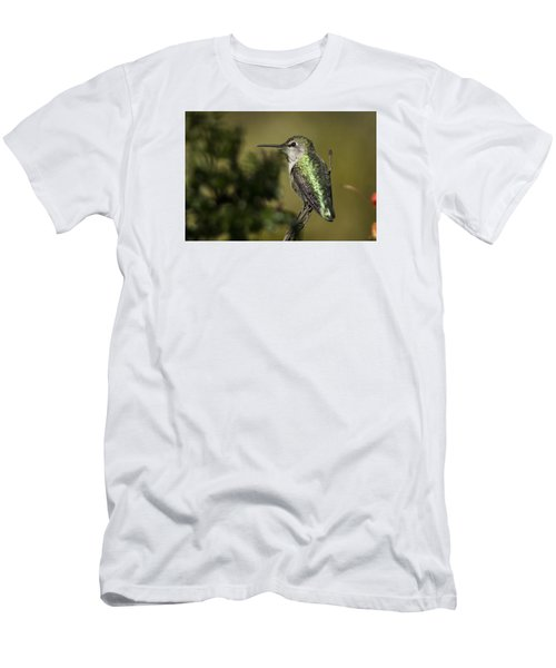 Anna's Hummingbird Men's T-Shirt (Athletic Fit)