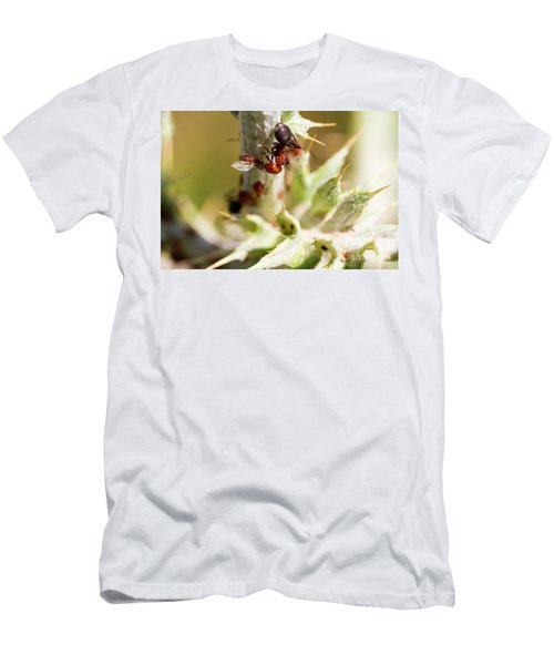 Ant Farming Men's T-Shirt (Athletic Fit)