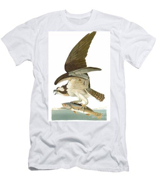 Audubon: Osprey Men's T-Shirt (Athletic Fit)