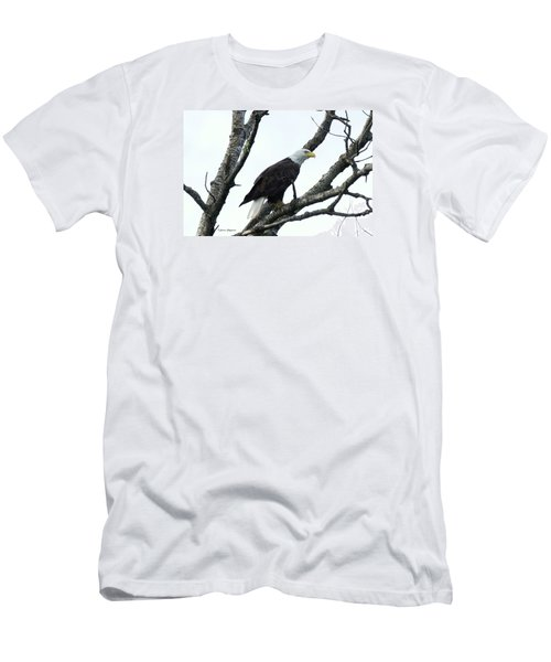 Bald Eagle 2 Men's T-Shirt (Slim Fit) by Steven Clipperton