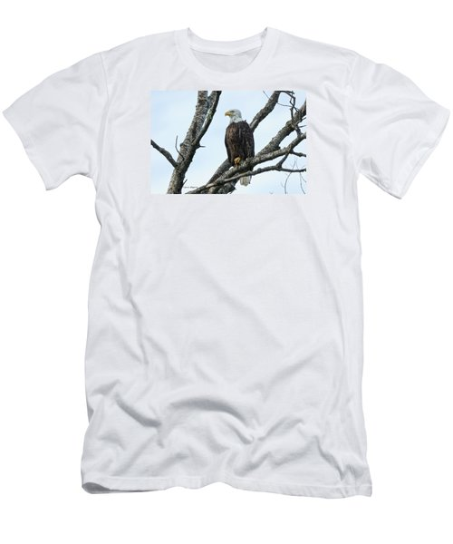 Bald Eagle 5 Men's T-Shirt (Slim Fit) by Steven Clipperton