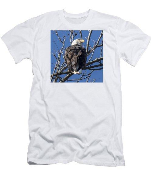 Bald Eagle Perched Men's T-Shirt (Athletic Fit)