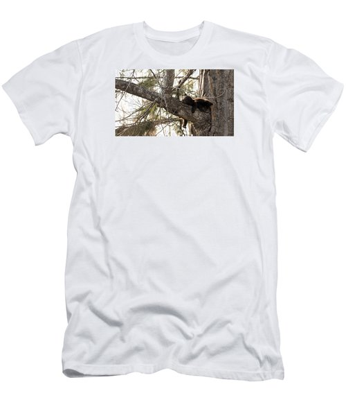 Bearly Hanging In There Men's T-Shirt (Athletic Fit)