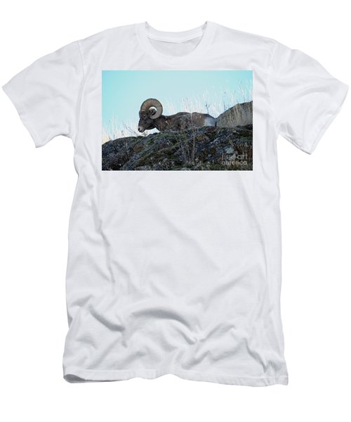 Bighorn Sheep Men's T-Shirt (Slim Fit) by Cindy Murphy - NightVisions