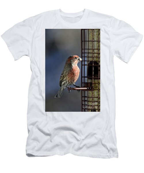 Bird Feeding In The Afternoon Sun Men's T-Shirt (Athletic Fit)