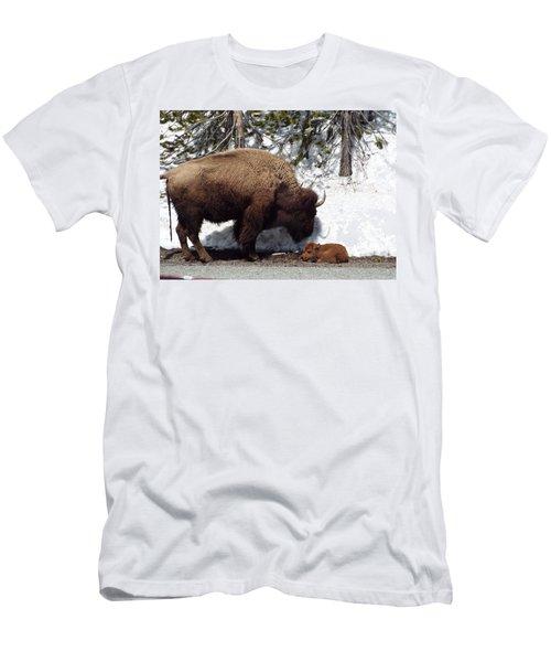 Bison Calf After Birth Men's T-Shirt (Athletic Fit)