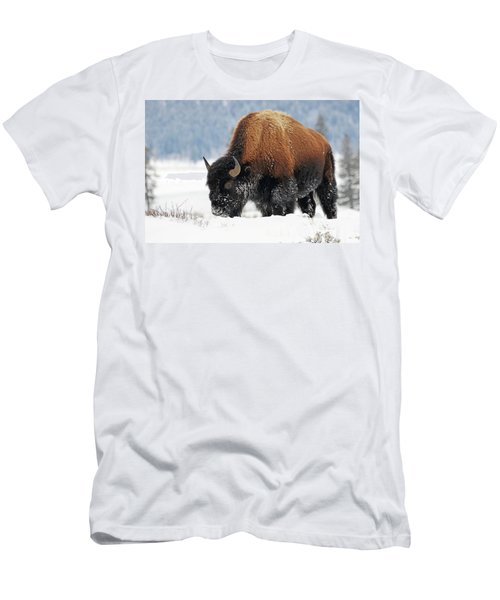 Bison Roaming In The Lamar Valley Men's T-Shirt (Athletic Fit)