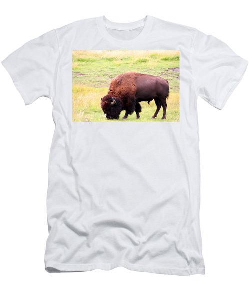 Buffalo Roaming Men's T-Shirt (Athletic Fit)