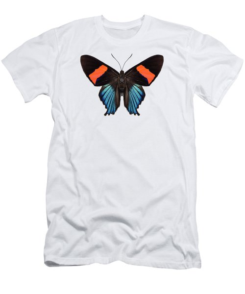 Butterfly Species Butterfly Species Ancyluris Miranda In High Definition Extreme Focus Isolated On W Men's T-Shirt (Athletic Fit)