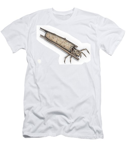 Caddisfly Limnephilidae Anabolia Nervosea Larva Nymph -  Men's T-Shirt (Athletic Fit)