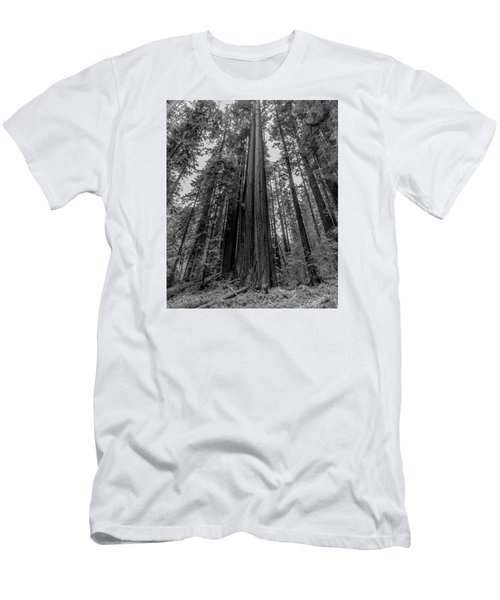 California Forest Men's T-Shirt (Athletic Fit)