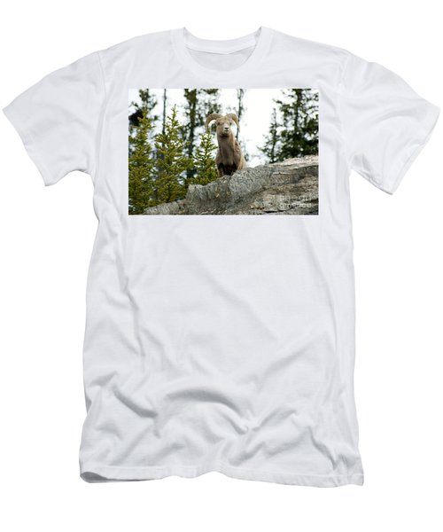 Canadian Bighorn Sheep Men's T-Shirt (Athletic Fit)