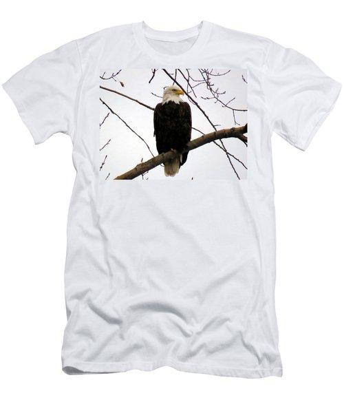 Cape Eagle Men's T-Shirt (Athletic Fit)